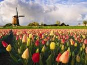 Hotelszoba bitcoinért már Hollandiában is!